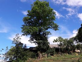 Big Tree Hmong Homestay photos Exterior