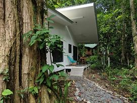 Peaceful Private And Modern Jungle Studio photos Exterior