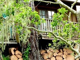 Rustic Cabin Like A Treehouse photos Exterior