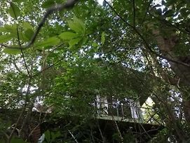 Jungle Living Tree Houses photos Exterior