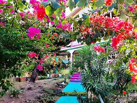 Colorful Garden House photos Exterior
