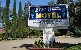 Blue Gum Motel Willows Ca