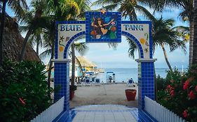 Blue Tang Inn Belize
