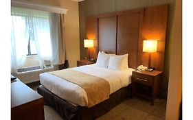Comfort Suites Buffalo Airport Ny