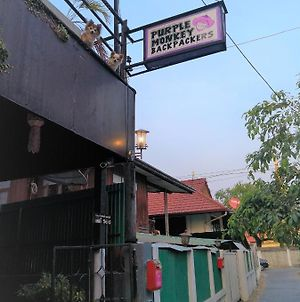 Purple Monkey Backpackers Chiang Mai photos Exterior