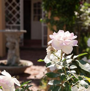 Roses And Pebbles B & B Guest House photos Exterior
