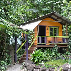 Rainforest Hideaway photos Exterior