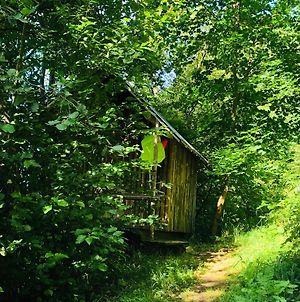 Tiny House In The Forest With River View photos Exterior