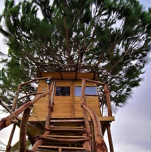 Ionian Treehouse Ecohosting Cuckoo'S Nest photos Exterior
