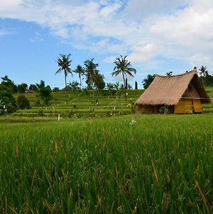 Wavi Eco Cottage In The Ricefield Near 7 Waterfalls photos Exterior