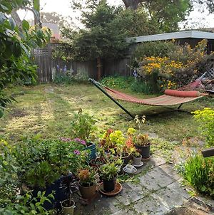 Relax In Unpretentious Peaceful And Authentic House With Public Transportation Cafes And U Of Berkeley Close By photos Exterior
