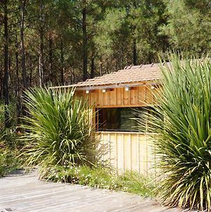 Immersion Foret Cabane Bois Lege Cap Ferret 1-4P photos Exterior