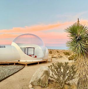 @ Marbella Lane Joshua Tree Modern Stargazing Bubble-Tent & House photos Exterior