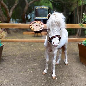 The Pony Experience; Glamping With Private Petting Zoo photos Exterior