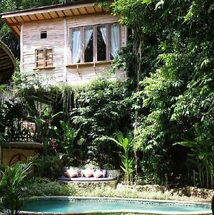 Roots Tree House photos Exterior