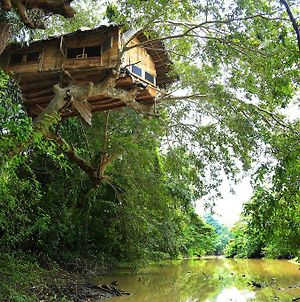 Kumbuk Tree House photos Exterior