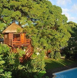 Tree Lodge Mauritius photos Exterior