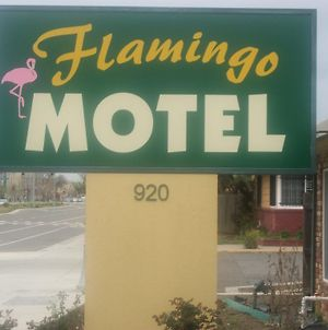 Flamingo Motel photos Exterior