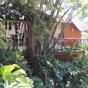 Treetops & Treats Guest House photos Exterior
