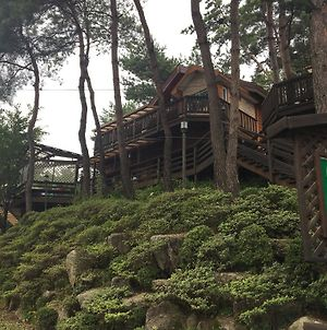 Hoengseong Pine Tree Story Pension photos Exterior