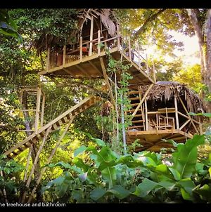 Jungle Treehouse By The Sea photos Exterior