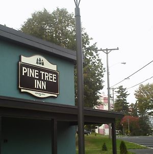 Pine Tree Inn photos Exterior