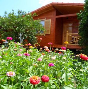 Ugur Pansiyon Bungalows photos Room