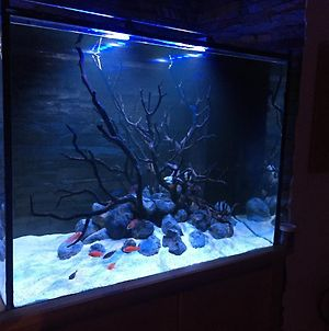 Aquarium House photos Exterior