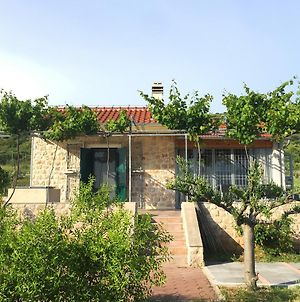 Holiday Home Olive photos Exterior