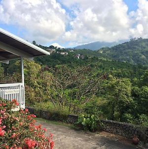 Neita'S Nest Jamaican Bed & Breakfast photos Exterior