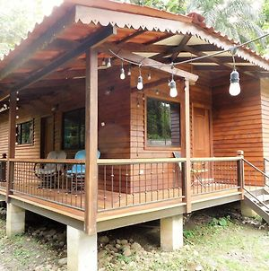 Casa Tulipan Jungle House photos Exterior