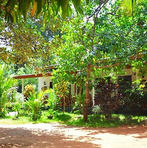 Sigiri Rock Side Home Stay photos Exterior