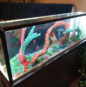 Zolotoi Skorpion photos Exterior