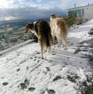 Swiss Borzoi House photos Exterior
