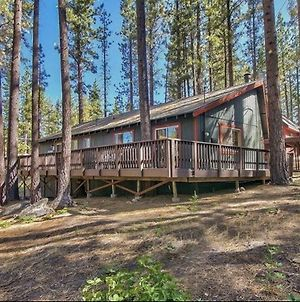 Brown Bear In The Woods Of Tahoe Hot Tub Ski House photos Exterior