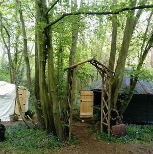 Ancient Woodland Retreat photos Exterior