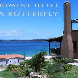 Villa Butterfly photos Exterior