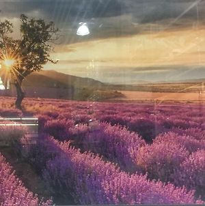 Feel The Colors Of Beautiful Koper - Lavender photos Exterior