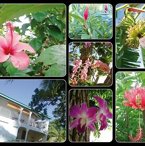 Orchidee Sainte-Anne Guadeloupe photos Exterior