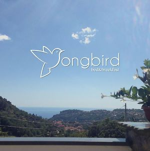 Songbird photos Exterior