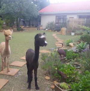 Alpaca Self Catering Cottage Kleinmond photos Exterior