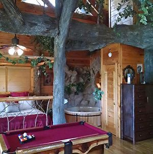 The Tree House photos Exterior