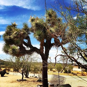 Joshua Tree Green Oasis photos Exterior