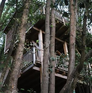 Orion Tree Houses photos Exterior