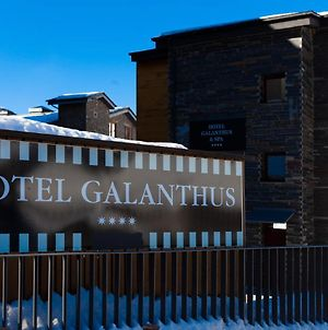 Galanthus photos Exterior