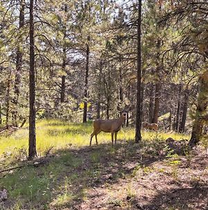 Wooded Retreat With Deck - 4 Mi To Downtown Flagstaff! photos Exterior