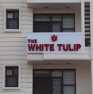 Hotel The White Tulip photos Exterior
