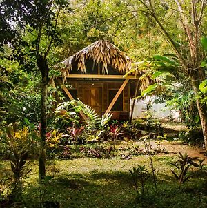 Wildlife Lodge Cahuita photos Exterior